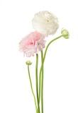 Twee bloemen Stock Foto