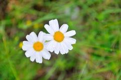 Twee bloemen Royalty-vrije Stock Foto's