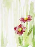 Twee bloemen Stock Afbeeldingen