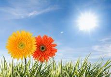 Twee bloemen die tegen blauwe hemel worden geïsoleerdj royalty-vrije stock afbeeldingen