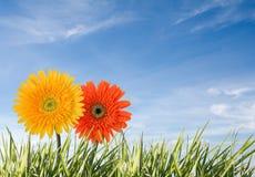 Twee bloemen die tegen blauwe hemel worden geïsoleerdj royalty-vrije stock foto's