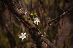 Twee bloemen die uit een boomkroon voortkomen Vrede Liefde royalty-vrije stock foto