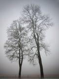 Twee bomen stock afbeelding