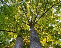 Twee bomen Stock Foto's