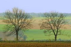Twee bomen Stock Foto