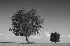 Twee bomen Royalty-vrije Stock Foto