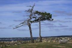 Twee Bomen Stock Afbeeldingen