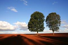 Twee Bomen Stock Fotografie