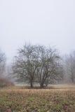 Twee Bomen Royalty-vrije Stock Afbeeldingen