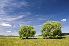 Twee bomen Royalty-vrije Stock Afbeelding