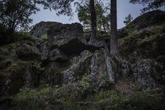 Twee bomen die van donkere die keien groeien in mos worden behandeld stock foto's
