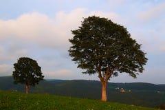 Twee bomen in een vallei stock fotografie