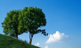 Twee bomen en blauwe hemel Stock Afbeeldingen