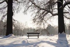 Twee bomen en houten banch Royalty-vrije Stock Fotografie