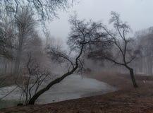 Twee bomen in mist die aan elkaar wordt gebogen Stock Foto