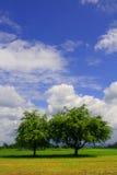 Twee bomen op de acre royalty-vrije stock foto