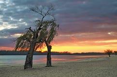 Twee bomen op de rivierbank bij zonsondergang Stock Foto