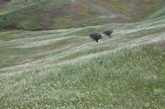 Twee bomen op een gebied Royalty-vrije Stock Foto