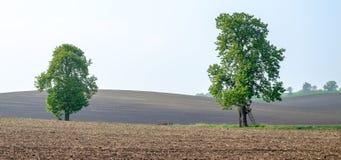 Twee bomen op een groene horizon, Landschap riepen Moravian Toscanië, Moravië, Tsjechische Republiek Stock Foto