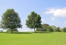 Twee Bomen op Heuvel Stock Fotografie