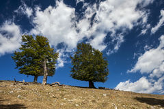 Twee bomen over een blauwe die hemel met witte wolken wordt verspreid royalty-vrije stock foto