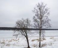 Twee bomen zonder bladeren op de achtergrond van een bevroren rivier stock foto
