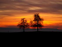 Twee bomen in zonsondergang royalty-vrije stock fotografie