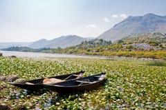 Twee boten in waterlelies Stock Afbeelding