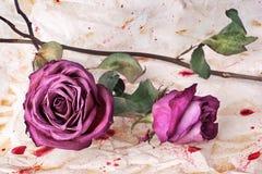 Twee Bourgondië stegen dicht bloemen op geschilderde verfrommelde oude document achtergrond, vakantieuitnodiging of het ontwerp v stock afbeelding