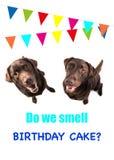 Twee bruine labrador retriever hond die omhoog met tekst kijken ruiken wij verjaardagscake op een verjaardagskaart Stock Foto's