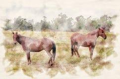 Twee bruine paarden op groene landbouwgrond stock afbeelding