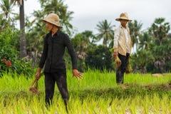 Twee Cambodjaanse rijstlandbouwers op de gebieden Stock Fotografie