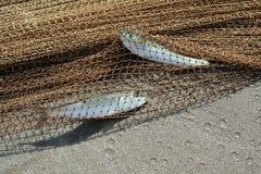 Twee catched vissen Stock Foto's