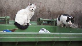 Twee daklozen dwalen katten zich bevindt op vuile container - Close-up af stock videobeelden