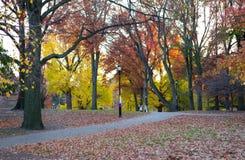Twee dames wandelen in het de herfstpark stock foto
