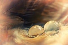 Twee dauw leggen op veer met uitstekende sfeer Stock Foto