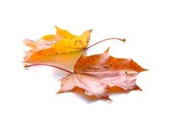 Twee de herfstbladeren Stock Foto's