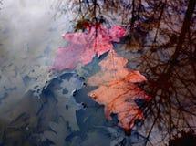 Twee de herfstbladeren Stock Foto