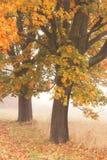 Twee de herfstbomen Stock Foto's