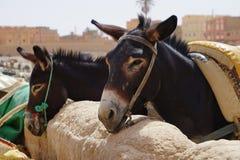 Twee die ezels in souk van de stad van Rissani in Marokko worden geparkeerd Stock Afbeelding