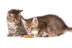 Twee die katjes eten Royalty-vrije Stock Foto's