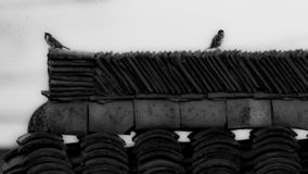 Twee die mussen op eaves worden neergestreken stock afbeeldingen