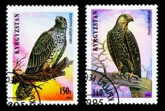 Twee die postzegels in Kyrgyzstan van de Roofvogels worden gedrukt serie, circa 1995 royalty-vrije stock afbeeldingen
