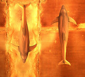 Twee dolfijnen royalty-vrije illustratie