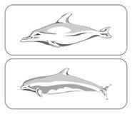 Twee dolfijnen Stock Illustratie