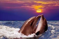 Twee dolfijnen dansen in het water Stock Afbeelding
