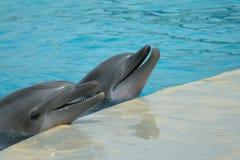 Twee dolfijnen tijdens een show royalty-vrije stock afbeeldingen