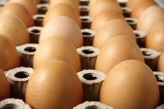 Twee dozens bruine eieren Stock Afbeelding