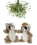 Twee dragen panda Royalty-vrije Stock Fotografie