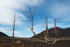 Twee droge bomen op badlands met blauwe hemel en vulkaan Stock Afbeelding